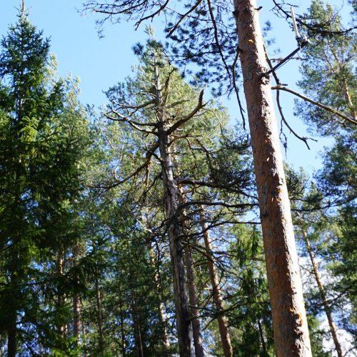 Metsä hoitaa meitä